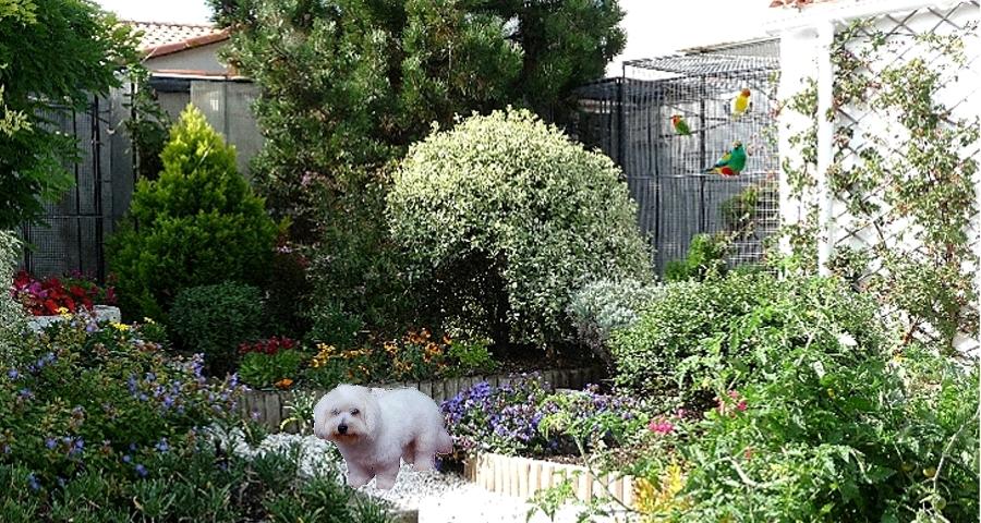 Le jardin et la maison for Crapaud dans la maison